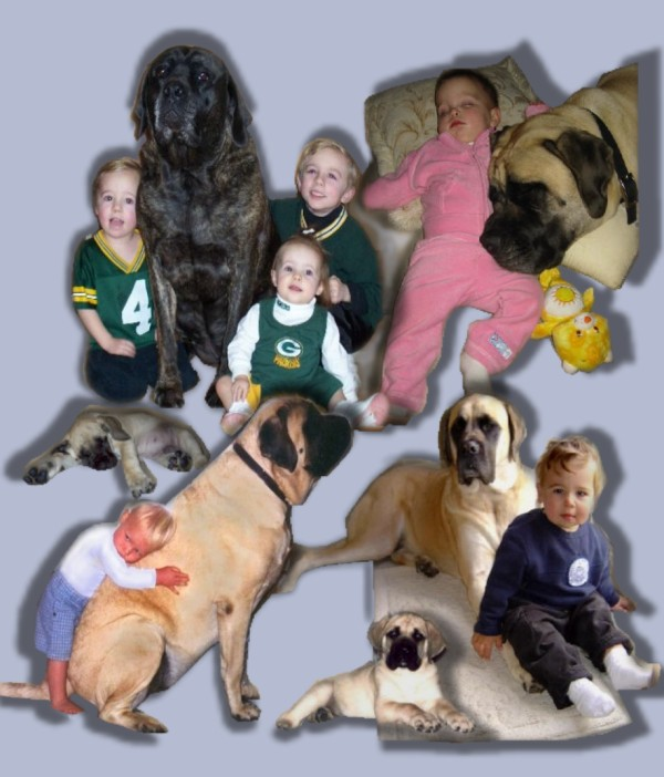 01 DOGS MAIN PAGE USE
