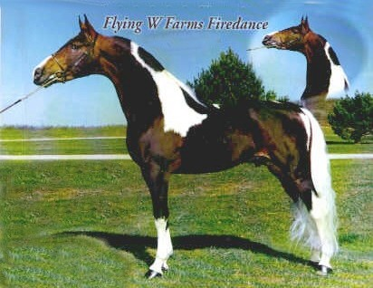 Friesian Cross - About Our Horses, Georgian Grande, Gypsy Drum